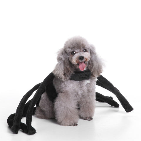 Halloween Pet Dog Spider Costume