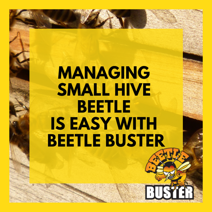 Managing Small Hive Beetle is Easy with Beetle Buster