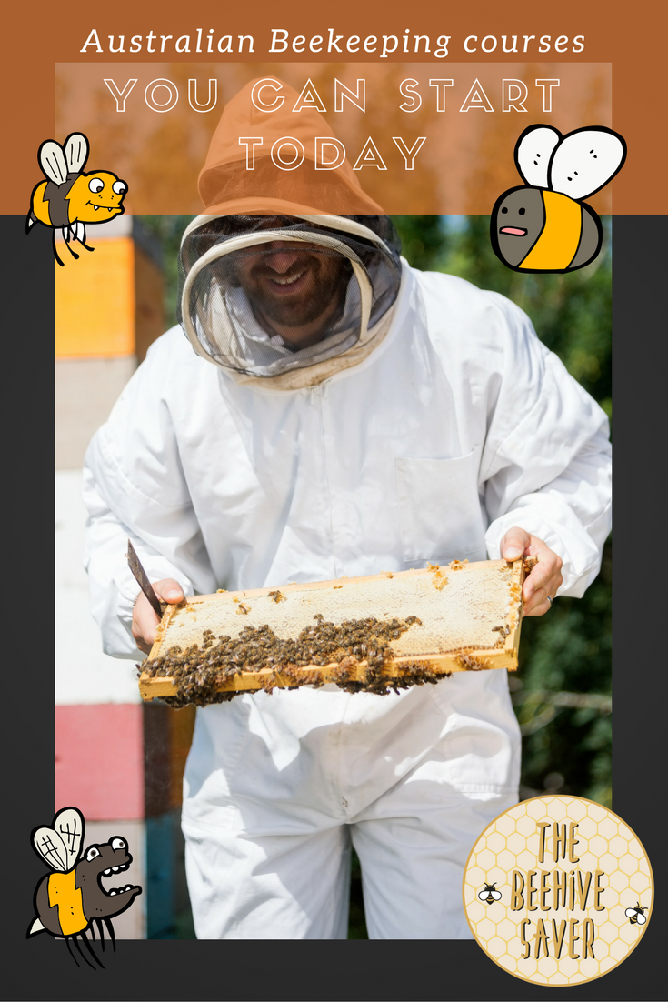 Australian Beekeeping Courses you can start today!