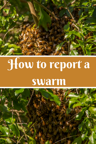 How to Report a Bee Swarm