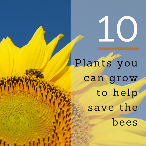 10 Plants you can grow to help save the bees