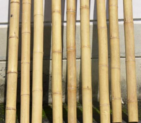 Guadua Bamboo Poles  3-4in D X 10ft H