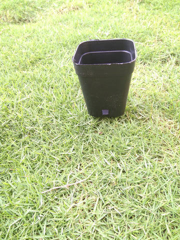Small plastic garden pot  ( pack of 10 )