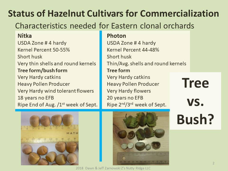 This presentation illustrates our efforts to bring hazelnuts to the Northeast.