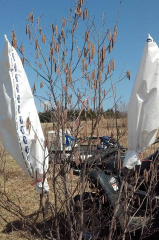 Hazel pollination bags for controlled breeding of hazels