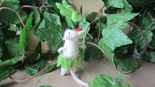 Tropical Mouse