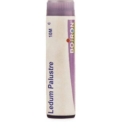 Boiron Homeopathy Ledium Palustre