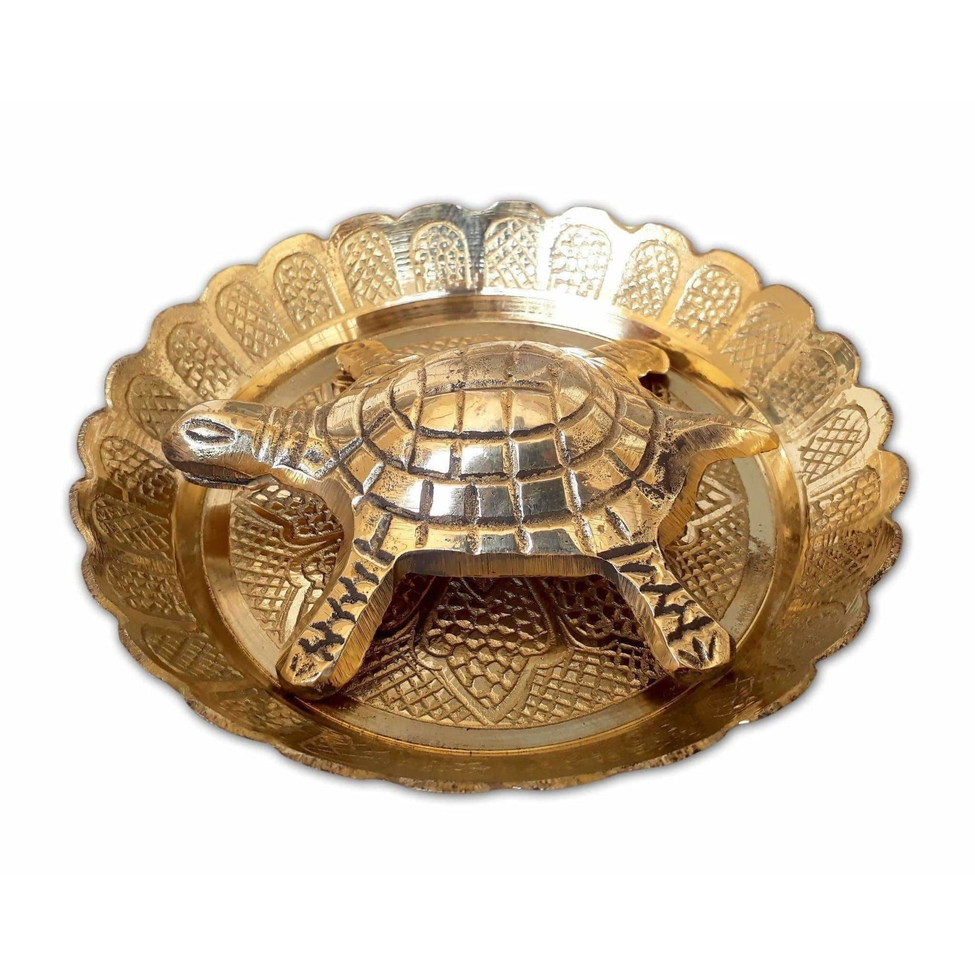 Tortoise with Small Brass Plate