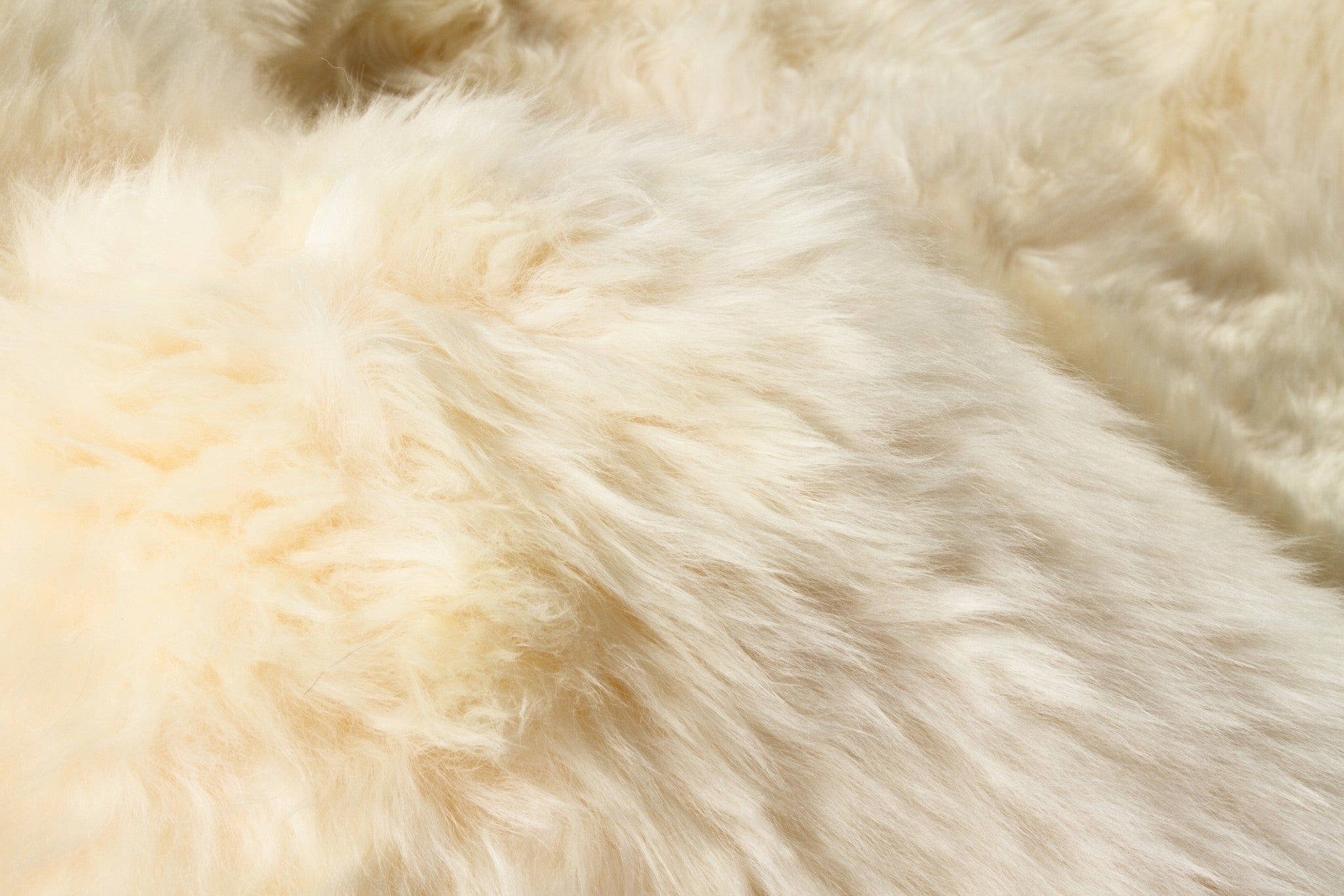 "69"" x 72"" x 2"" Gold, Sheepskin - Area Rug"