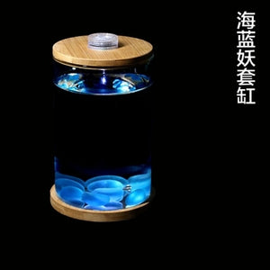 Micro-view Office Aquarium Creative Gifts - Office Aquarium - 99fab.com