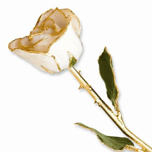 Lacquer Dipped Gold Trim White Satin Rose - AydinsJewelry