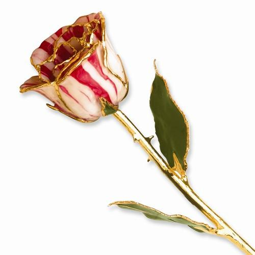 Lacquer Dipped Gold Trim Peppermint Rose - AydinsJewelry