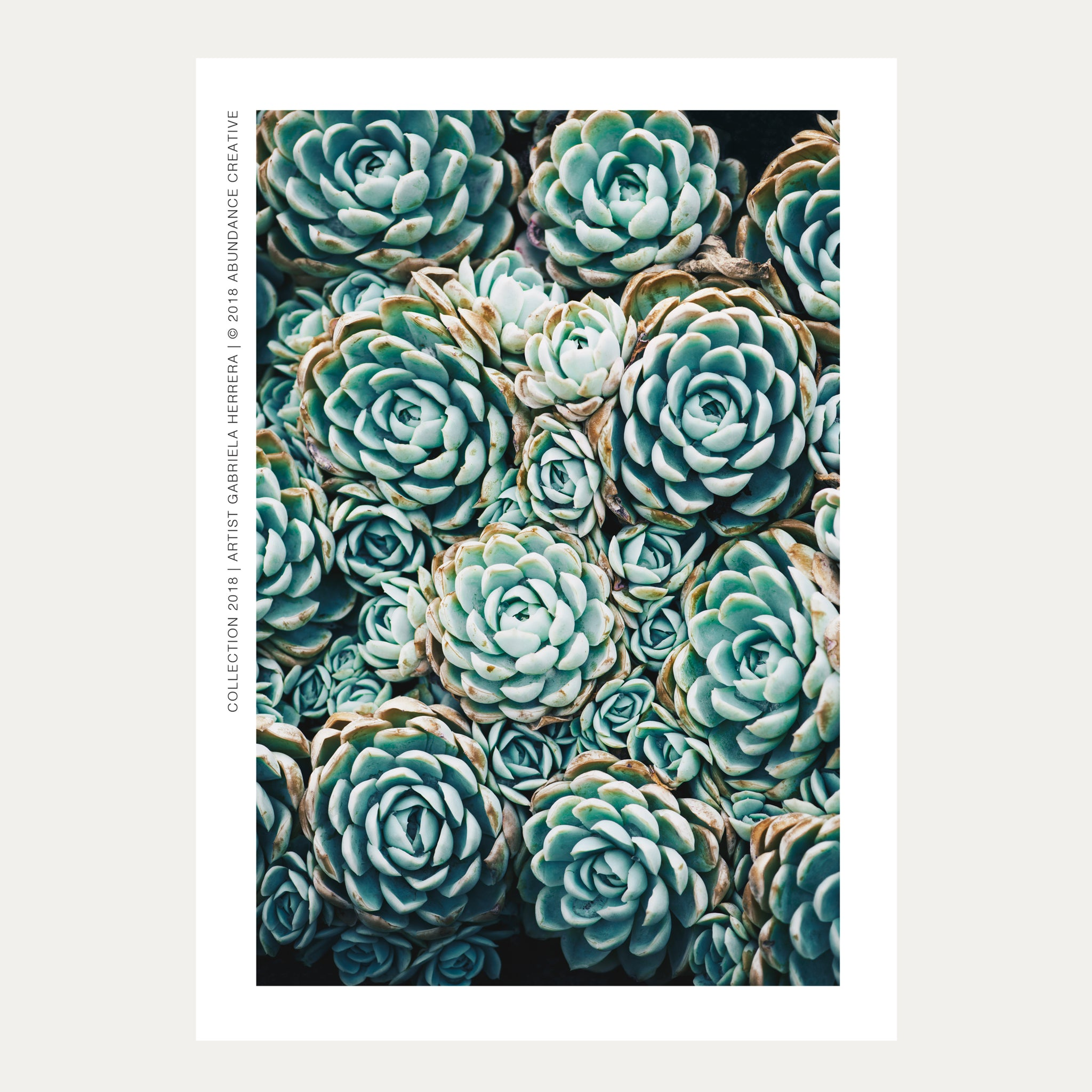 Harmony Succulent No.4 - Wall Art Mounted Under Acrylic Glass