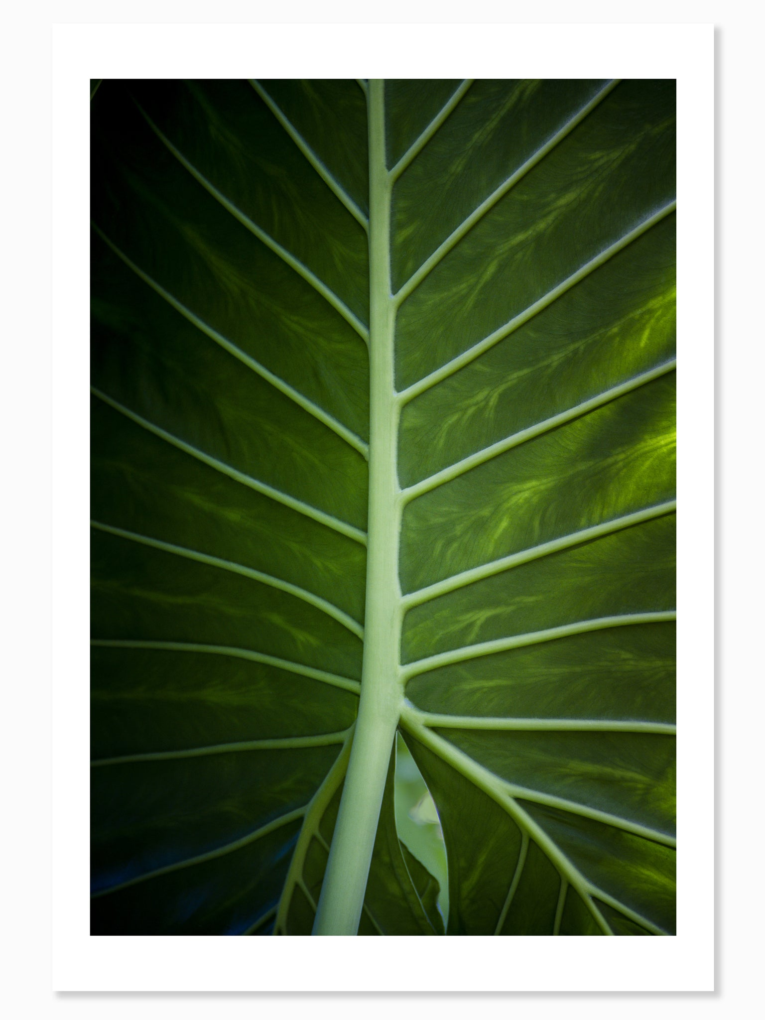 Tropical Leaf - Wall Art Mounted Under Acrylic Glass