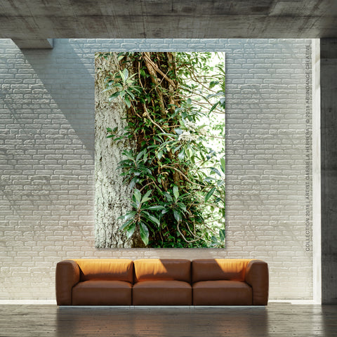Forest and Vines No.1 - Wall Art Mounted Under Acrylic Glass