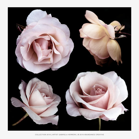 Chanel Rose Family - Wall Art Mounted Under Acrylic Glass