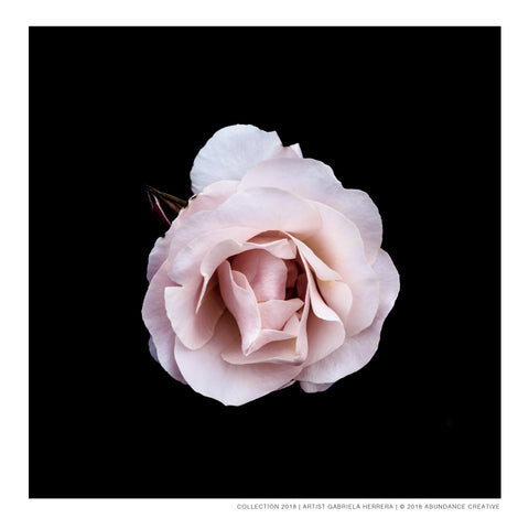 Chanel Rose Love - Print on Hahnemuehle Fine Art Paper