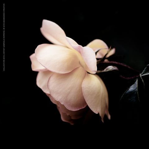 Chanel Rose Passion Beauty - Wall Art