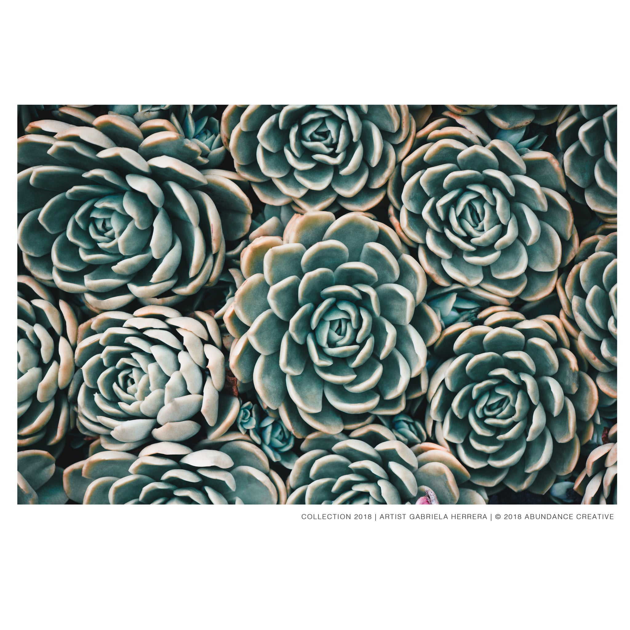 Harmony Succulent No.3 - Wall Art Mounted Under Acrylic Glass