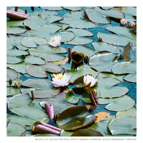 Water Lily No.4 - Print