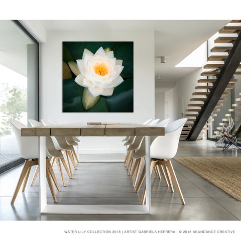 Water Lily No.5 - Wall Art Mounted Under Acrylic Glass