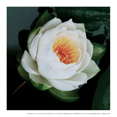 Water Lily No.6 - Print