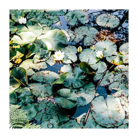 Abundance Water Lily - Print on Hahnemuehle Fine Art Paper