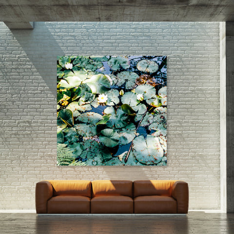 Abundance Water Lily - Wall Art Mounted Under Acrylic Glass