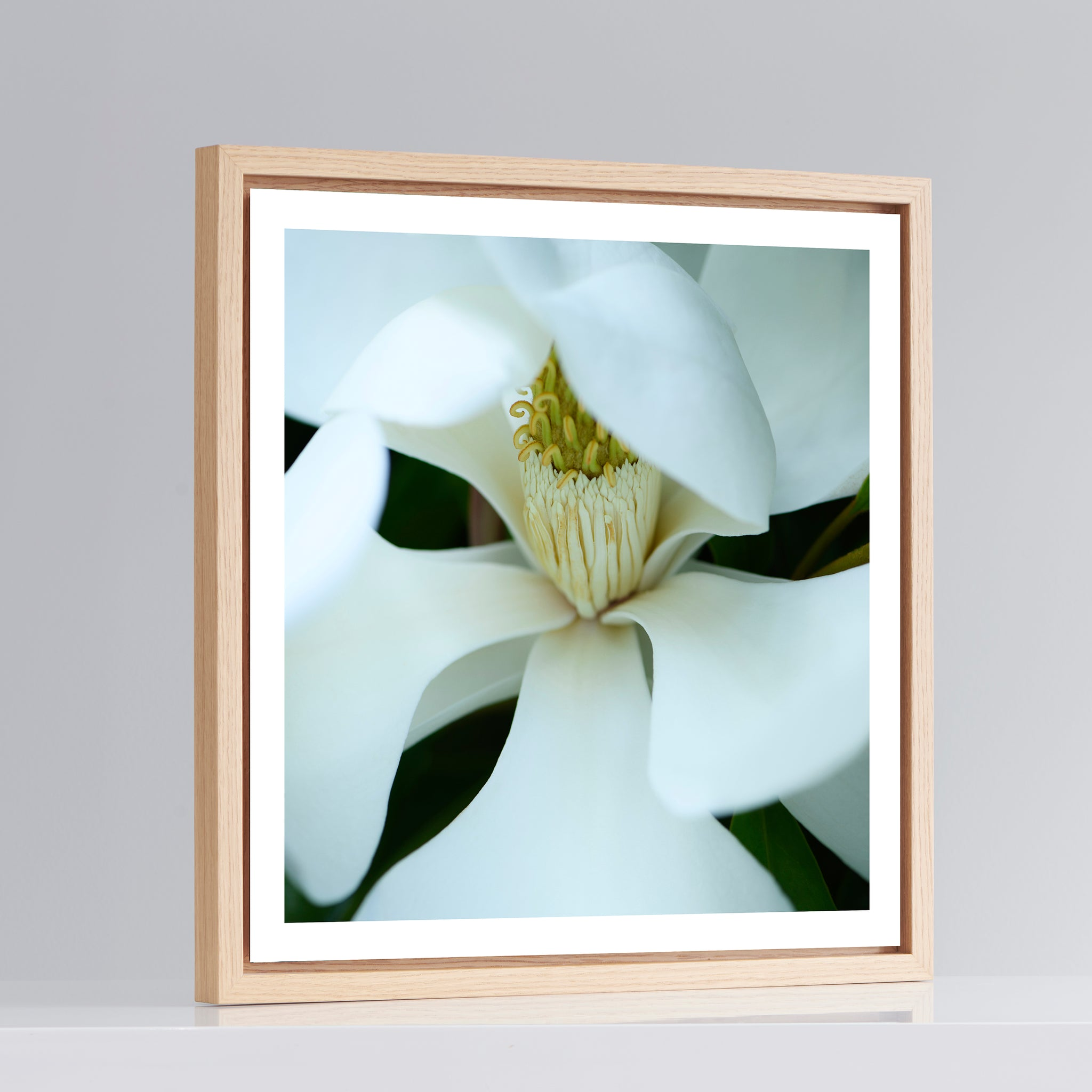 Evergreen Magnolia No2 - Photo Art with Natural Oak Frame