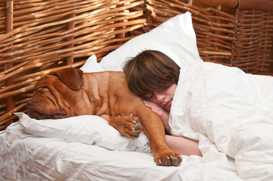 Should Your Dog Be Allowed on the Bed?