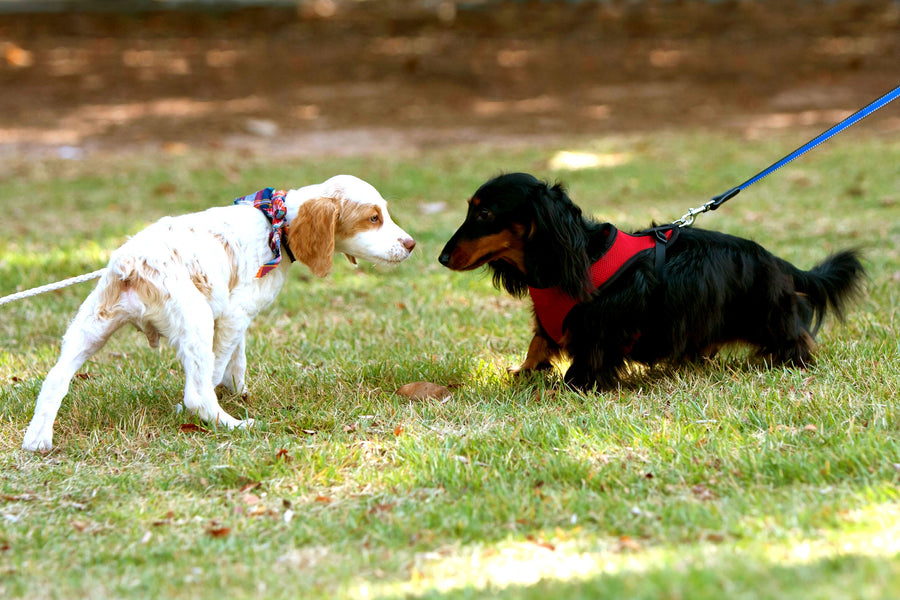 5 Ways to Socialize Your Dog