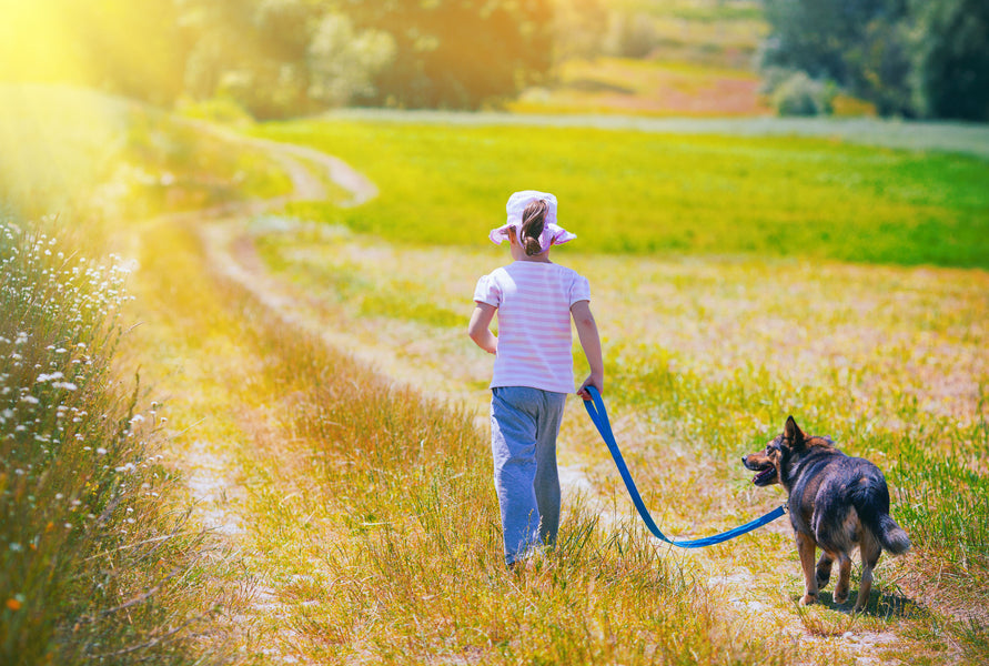 Teaching Your Dog To Walk Beside You...It's Not as Hard as You Think!