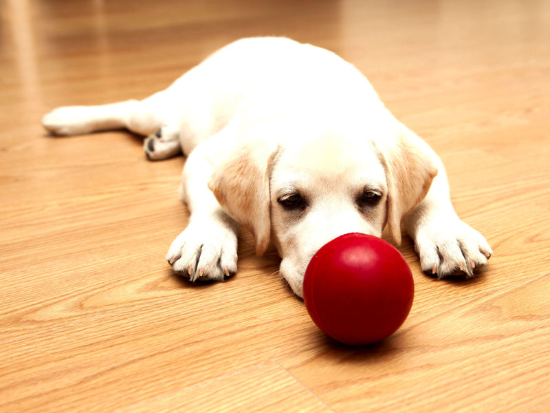 6 Warning Signs That Your Puppy Is Dominant
