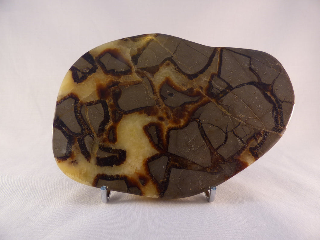 Polished Septarian Display Plate - 153mm, 386g