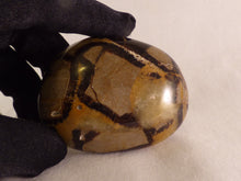 Septarian Freeform Palm Stone - 64mm, 112g