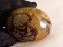Septarian Freeform Palm Stone - 73mm, 198g