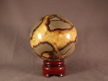 Large Madagascan Septarian 'Dragon Stone' Sphere - 83mm, 805g