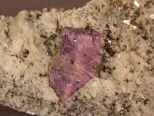 Madagascan Ruby in Quartzite Natural Specimen - 84mm, 91g