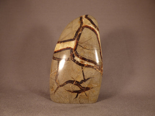 Madagascan Septarian 'Dragon Stone' Standing Display Freeform - 137mm, 683g