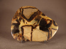 Madagascan Polished Septarian 'Dragon Stone' Display Plate - 136mm, 358g