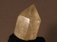 Congo Citrine Crystal Point - 31mm, 15g