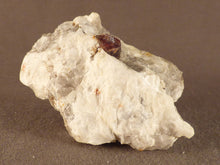 Namibian Natural Red Pyrope Garnet in Quartz Specimen - 60mm, 47g