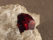 Namibian Natural Red Pyrope Garnet in Quartz Specimen - 42mm, 32g