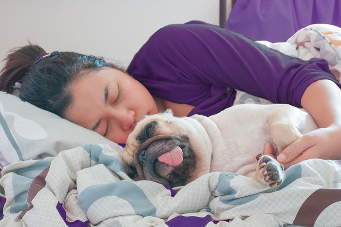 woman sleeps in bed spooning with her pug