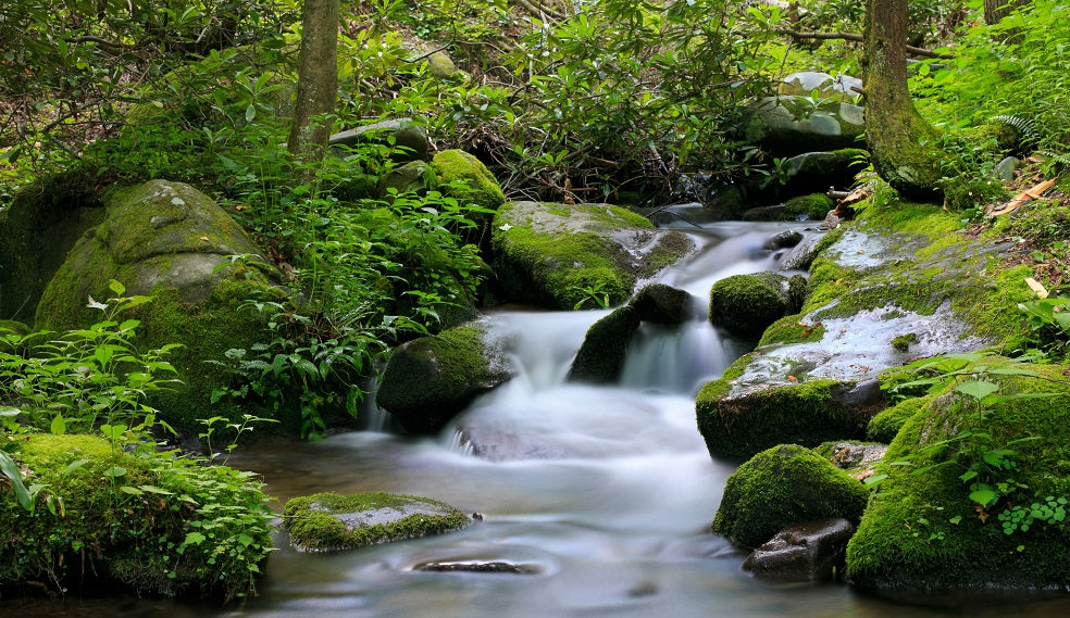 lush, green foliage on either side of a fast-moving stream with large rocks