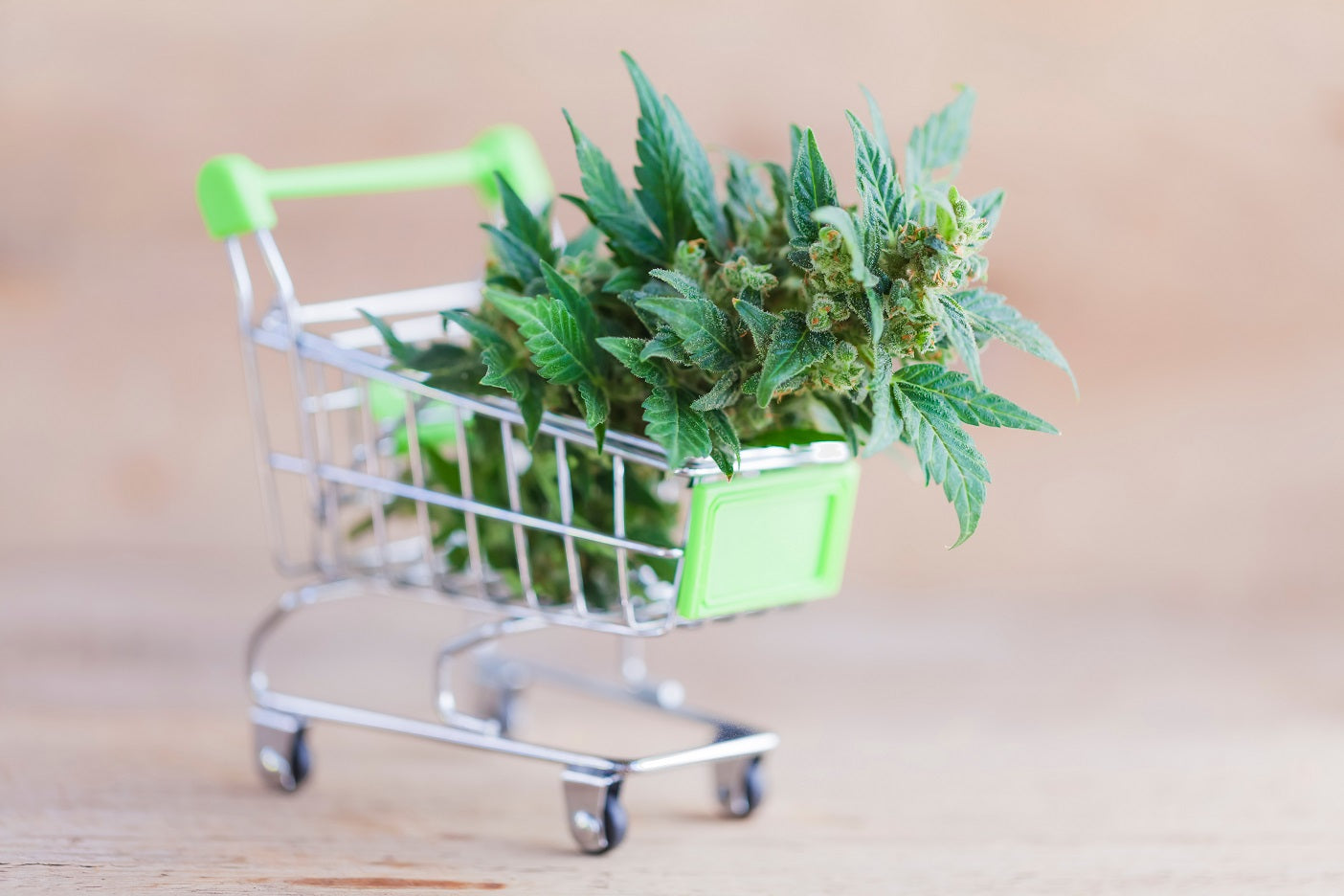 mini shopping cart filled with marijuana plant