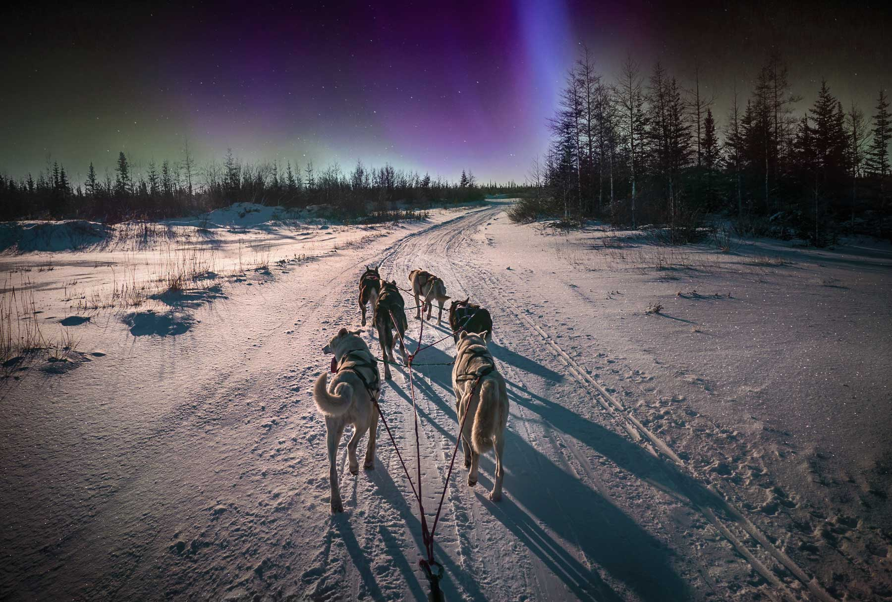 Six huskies pulling sled toward northern lights in Yellowknife, Canada