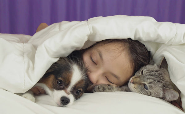young girl sleeps next to small dog and cat