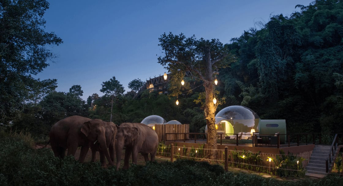 elephants roam outside jungle bubble at sleep retreat