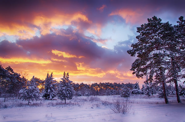 Sun setting behind snow-covered trees in Canada